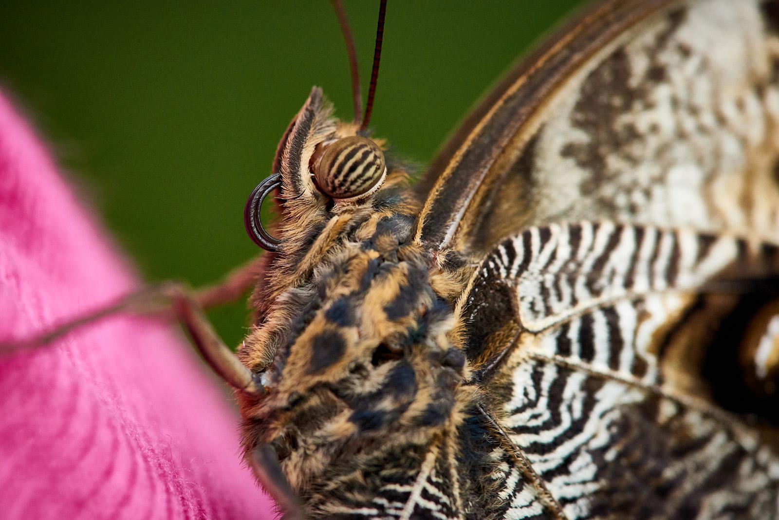 Butterfly Farm 048